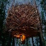 birds_nest_wa1