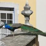 Hotel_Solar_Do_Castelo_Pateo-detail