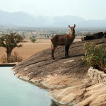 waterbuck-at-pool